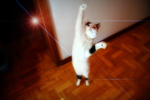 feline_high5