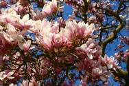 spring had definitely sprung. along with warmer weather than in Paris, we also enjoyed some beautiful blooms.