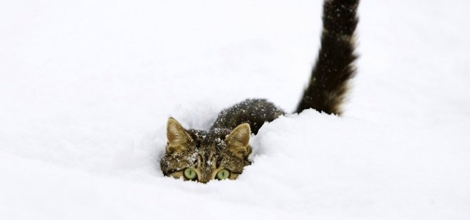 snow_cats_kittens_funny_animals_fondo_upscaled_1280x600