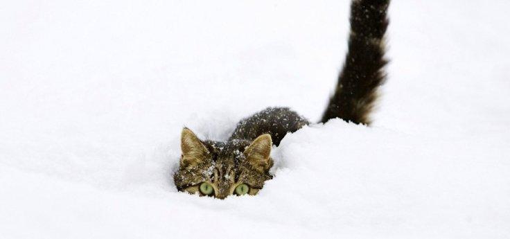 snow_cats_kittens_funny_animals_fondo_upscaled_1280x600